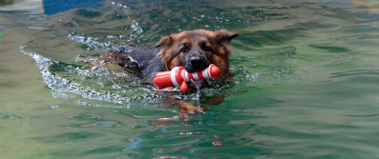 Hondenzwemmen - H2Ond