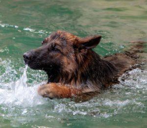 Angst voor water H2Ond - hondenzwemmen.com