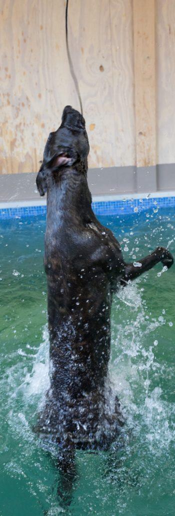 Spelen H2Ond hondenzwemmen