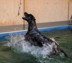 zwemmen is leuk bij H2Ond - hondenzwemmen.com